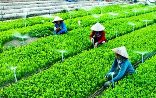 Tổng hợp chi phí kế toán thuế HTX nông nghiệp – Kế toán Đức Minh