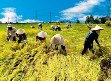 Từ năm 2011, nông dân có tiếp tục được miễn, giảm thuế sử dụng đất nông nghiệp?